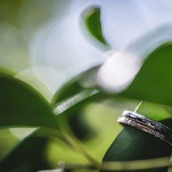 ドレス 指輪 靴の写真 1枚目