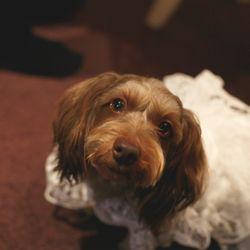 愛犬の写真 1枚目