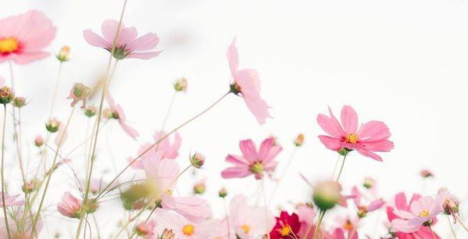 AND FLOWERSのカバー写真