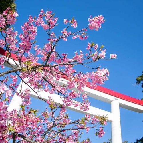 鎌倉宮の公式写真2枚目