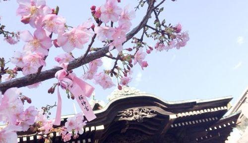 桜神宮の公式写真5枚目