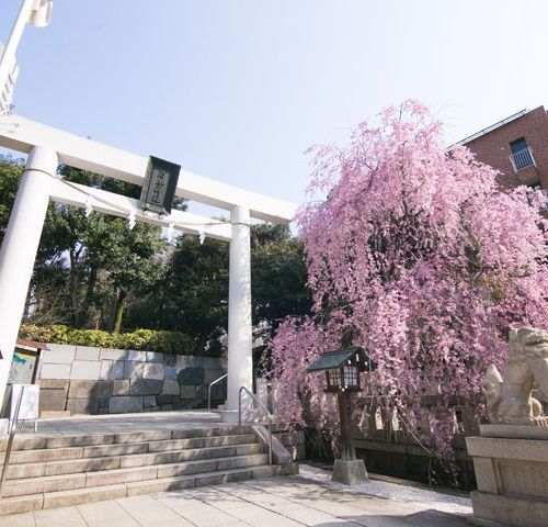 乃木神社の公式写真3枚目
