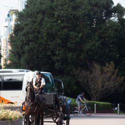 馬車の写真 1枚目