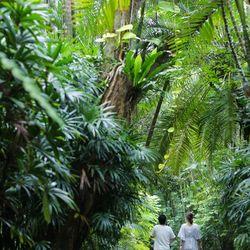 前撮り 沖縄  東南植物楽園の写真 8枚目