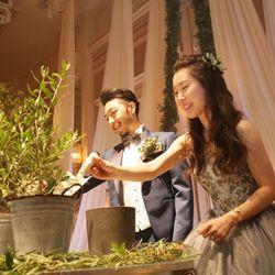 夫婦の木 オリーブの写真 1枚目