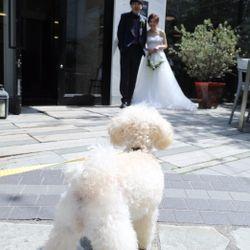 犬と一緒にweddingの写真 3枚目