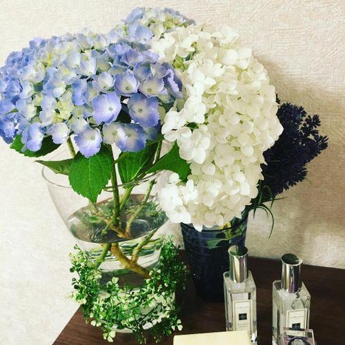 紫陽花&アナベルの写真 1枚目