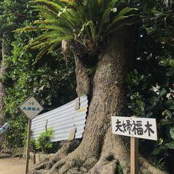 沖縄セルフ前撮りの写真 4枚目
