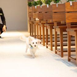 愛犬と一緒のwedding の写真 3枚目