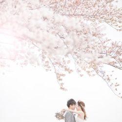 桜ウェディングフォトの写真 1枚目