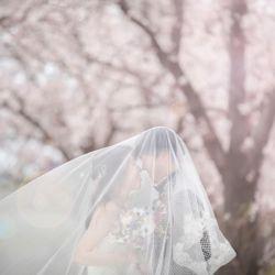 桜ウェディングフォトの写真 4枚目