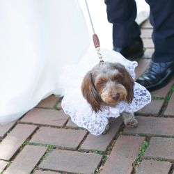 愛犬の写真 2枚目