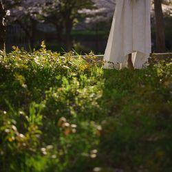 ドレス×桜の写真 14枚目