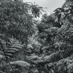 ジャングル前撮りの写真 3枚目