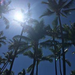 ハワイ島の写真 6枚目