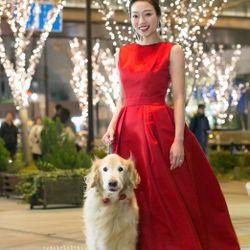 前撮り【愛犬・赤ドレス】の写真 6枚目