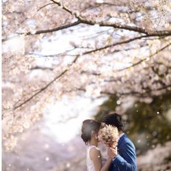 ドレス×桜の写真 5枚目