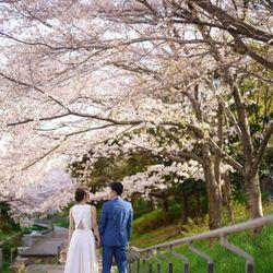 ドレス×桜の写真 8枚目