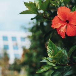 沖縄挙式の写真 8枚目