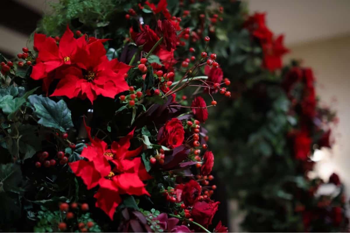 【グリーン×レッド】クリスマスカラーで聖なるウェディングを演出♡のカバー写真