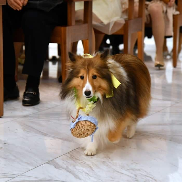 大切なペットも参加できる♪東京の結婚式会場10選♡のカバー写真