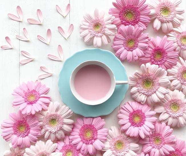 ブーケや装花に使いたい♪人気の【花&花言葉】一覧**のカバー写真