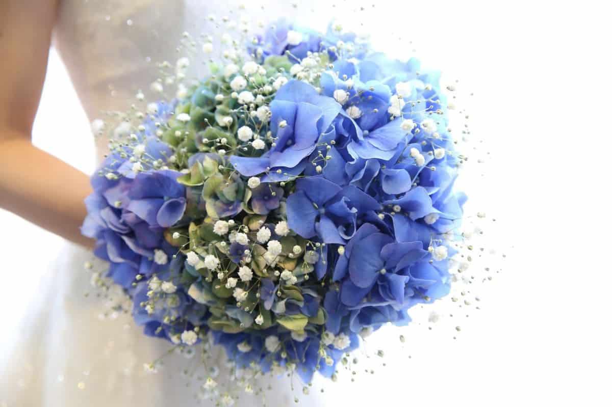 結婚式にぴったりの【6月】の誕生花と花言葉は?30日まで総まとめ♡のカバー写真 0.6658333333333334